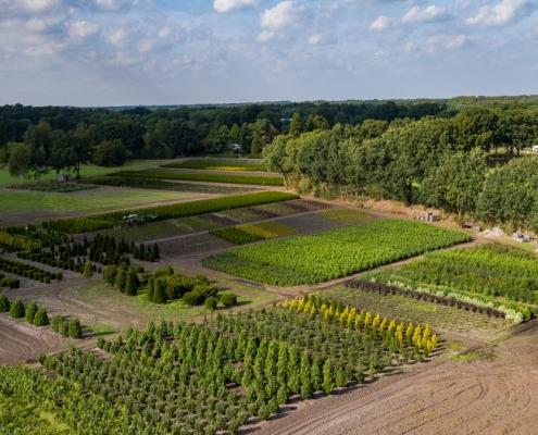 Luftbild Baumschule zu Klampen